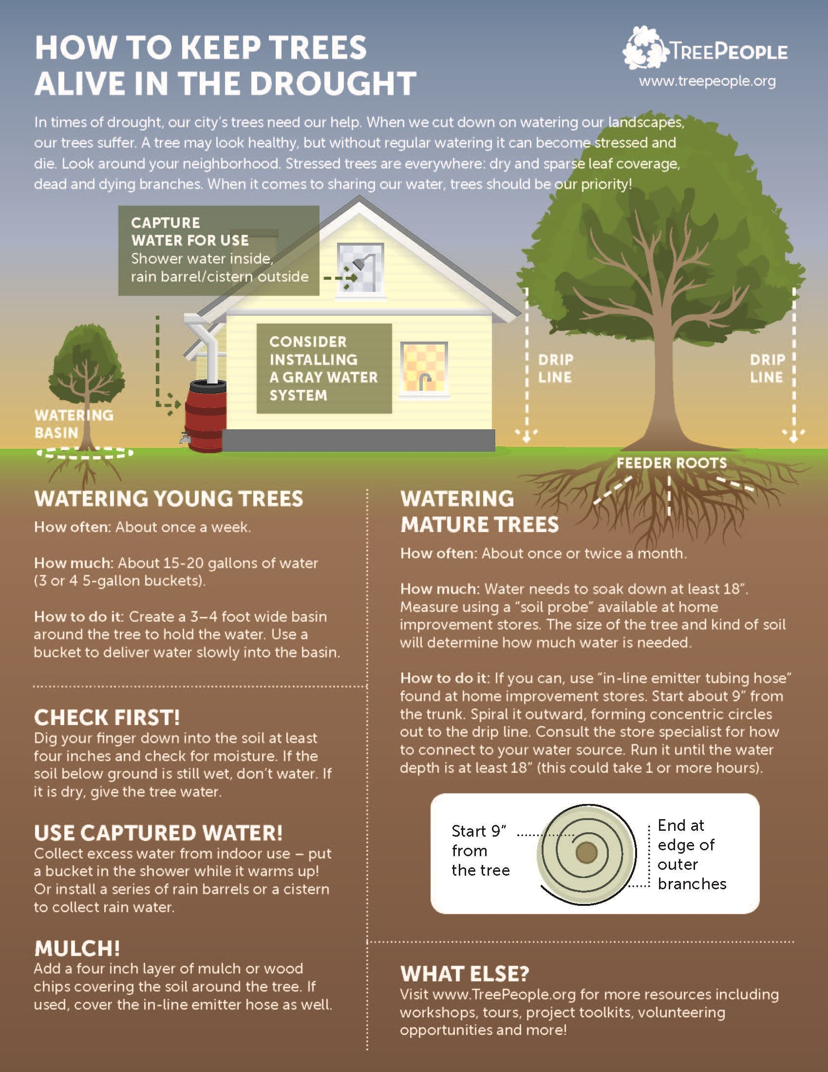 TreePeople - How to Keep Trees Alive in the Drought